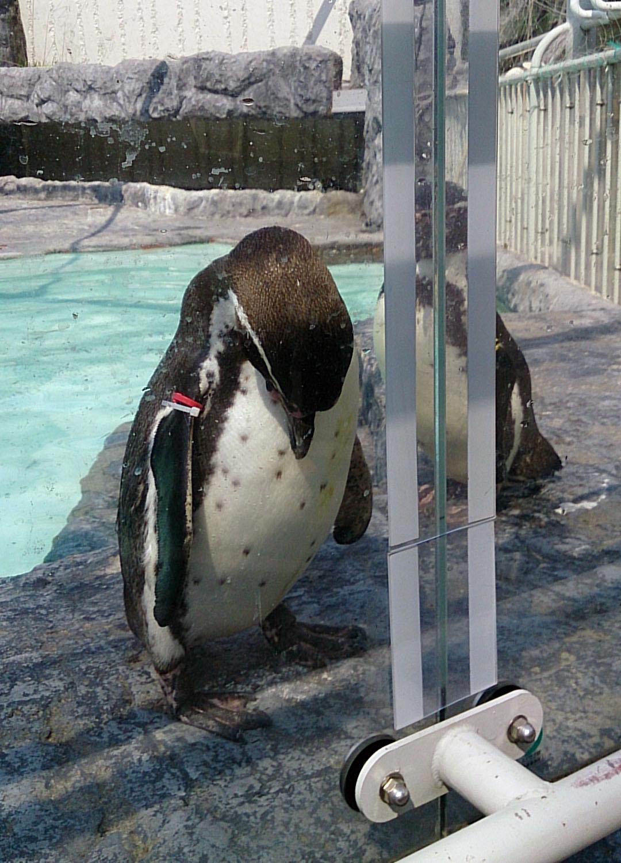 行ってみたかった!ペンギンにちなんだお店