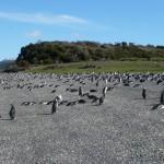 海外のペンギンツアー@アルゼンチン ウシュアイア