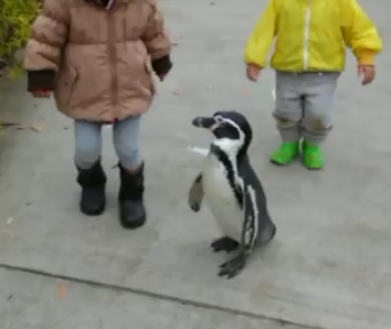 ペンギンとお散歩?@埼玉県こども動物自然公園