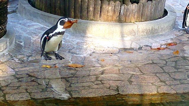 無料でペンギンに会える場所!?