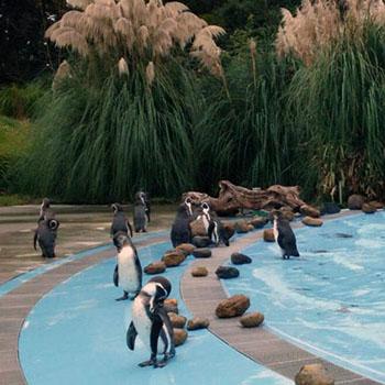 ペンギンの日常が垣間見えるかも?@埼玉県こども動物自然公園