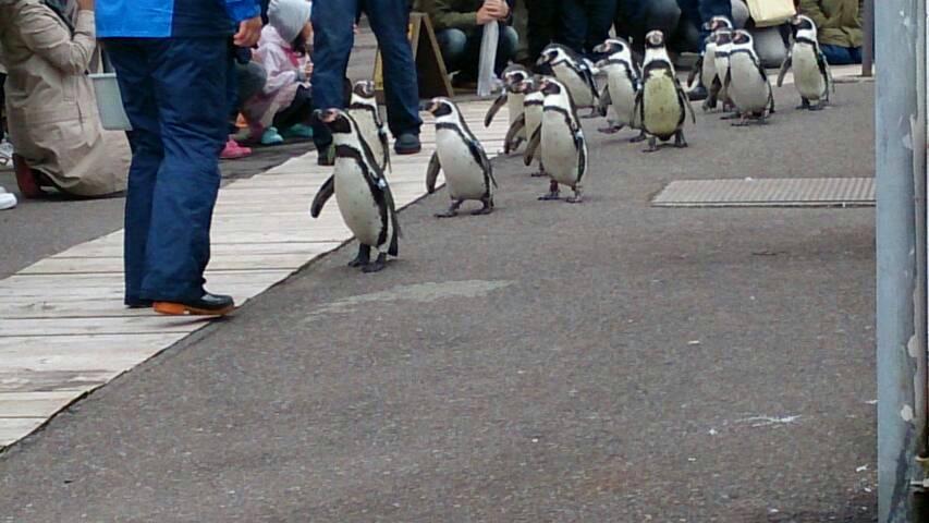 ペンギン散歩~自由なりに頑張った結果www
