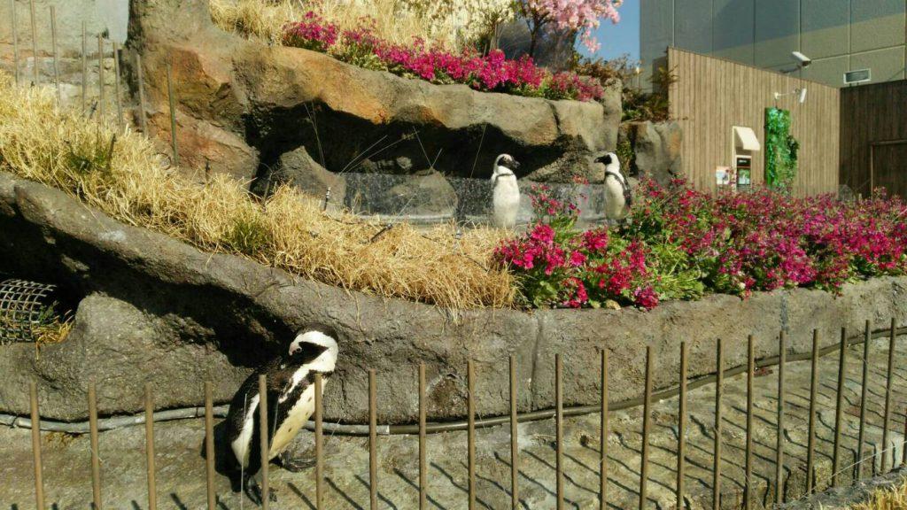 草原のペンギンのイメージ